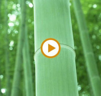 Video – Bamboo Wood Countertops